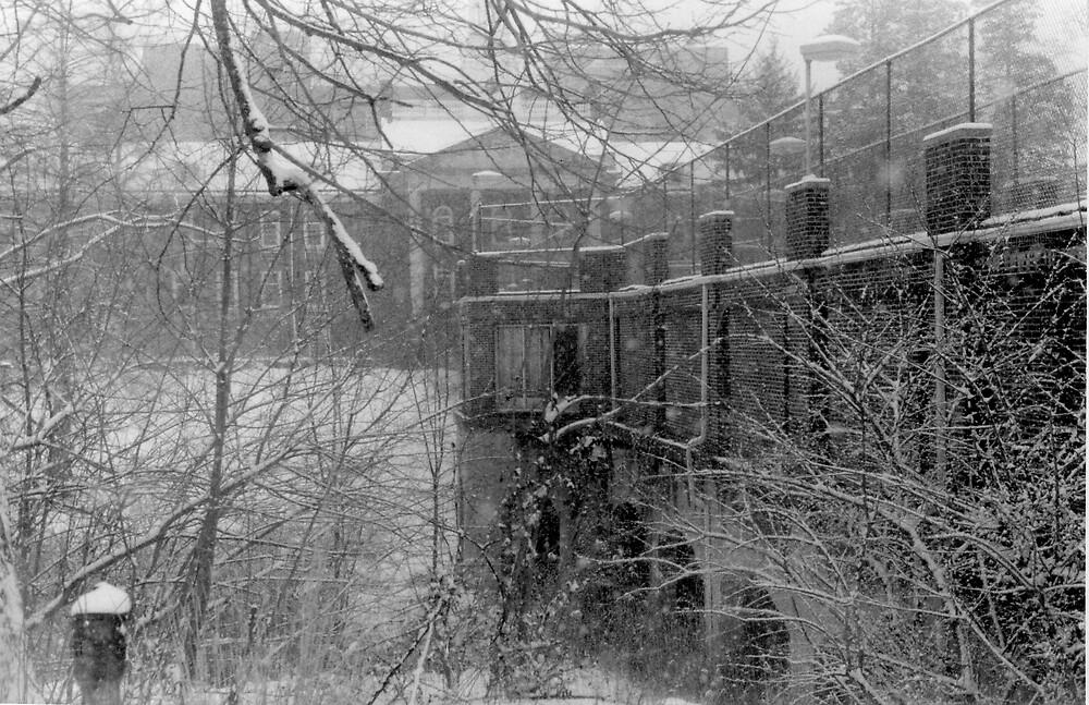 Asylum by Tim-1138