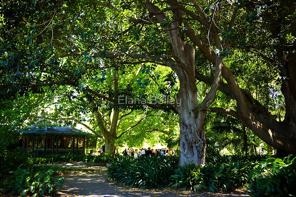 Lunch at the Adelaide Botanic Gardens Restaurant by Elana Bailey