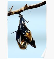 Batty Poster