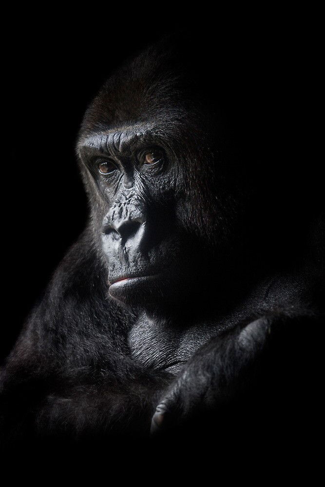 Gorilla by hcreations