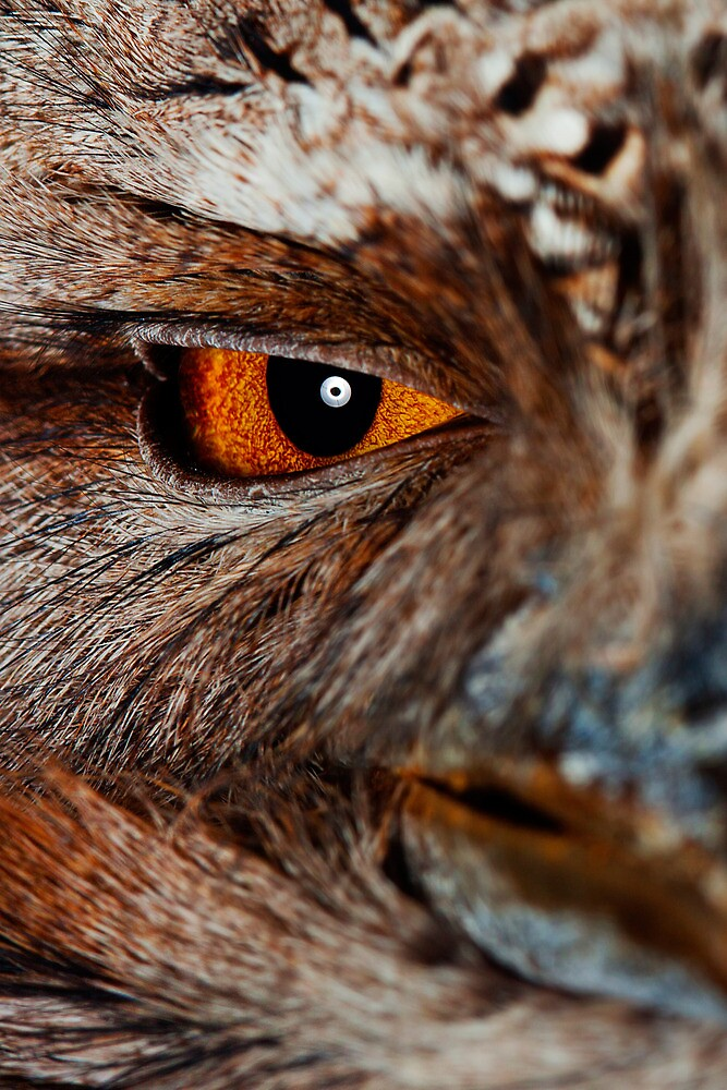 Tawny Frog Mouth by hcreations