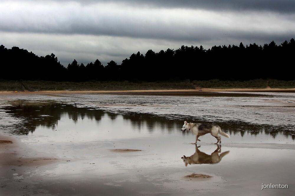 Wolfy on the beach by jonlenton