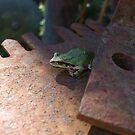 frog on a saw by colleensilkart