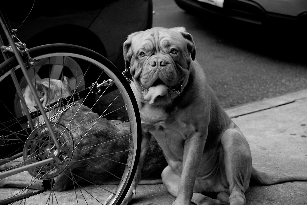 Dogs tied to a bicycle by alanbuech