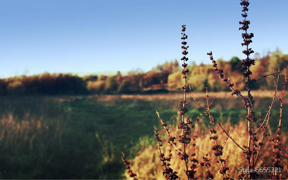 Autumnal Landscape by Staja-6655321