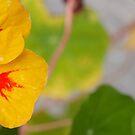 Yellowish reminder of summer. by Janne Keinänen