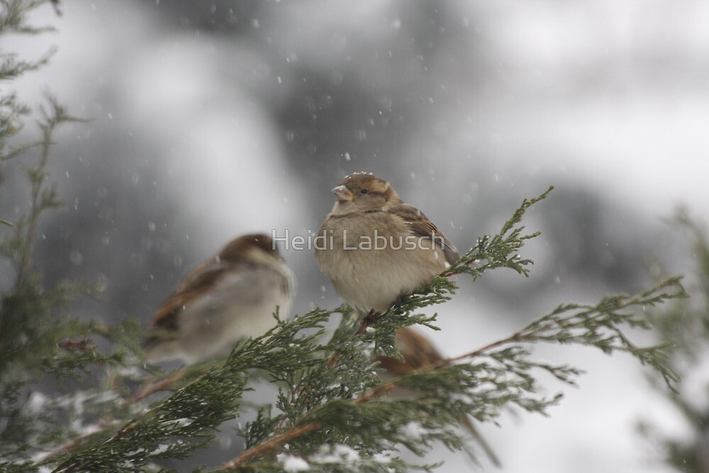 Winter Wonderland by Heidi Labusch