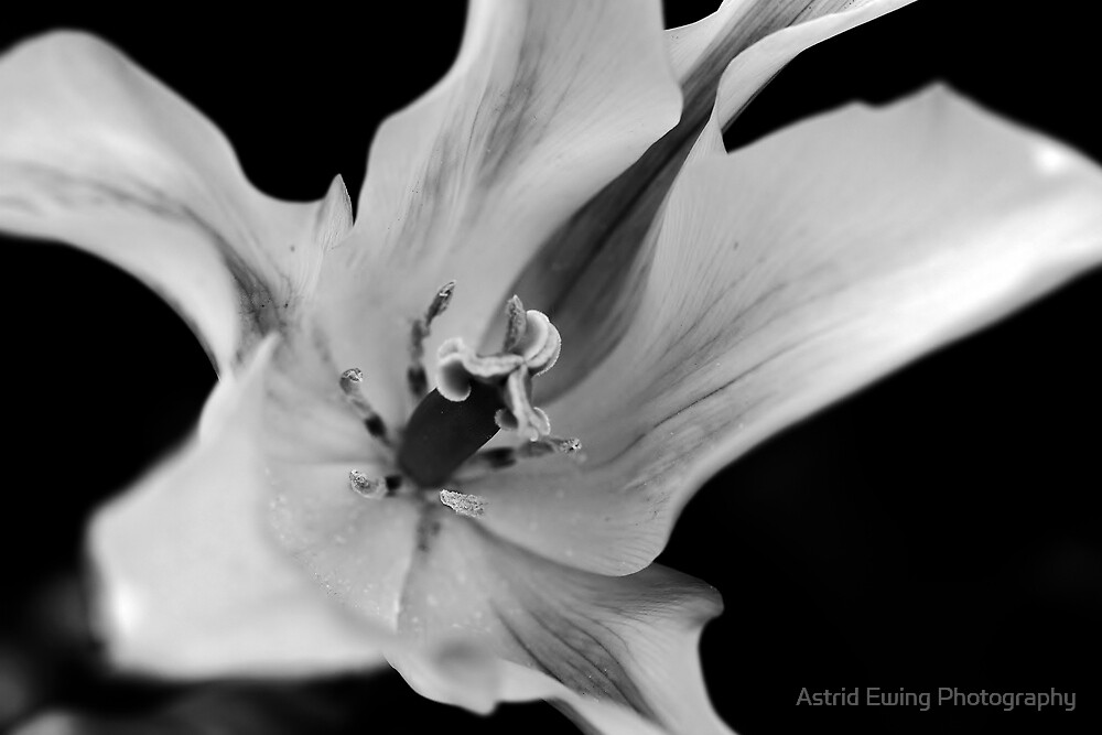 Beautiful Gift by Astrid Ewing Photography