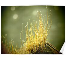 Winters Grass Poster