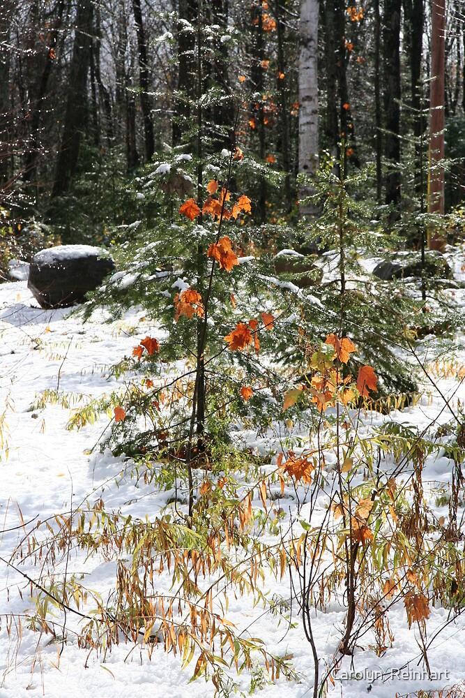 Autumn Winter Muskoka by Carolyn  Reinhart