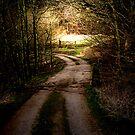 The Dark Path (colour) by MrDeath