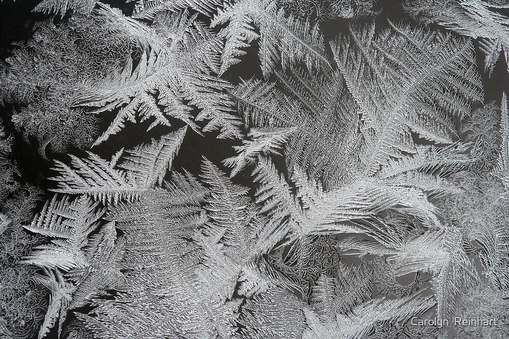 Nature's Design by Carolyn  Reinhart