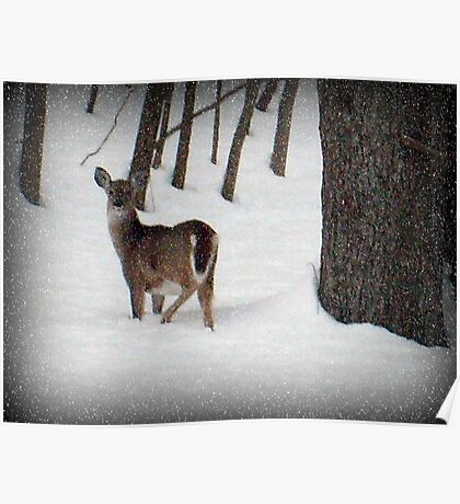 Did You Call Me? (White tailed deer) Poster