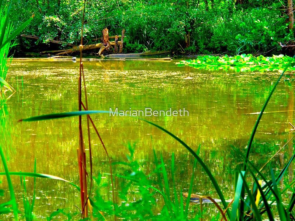 An Irish Spring pond by MarianBendeth