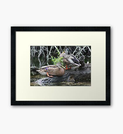 The Grey Pair Framed Print