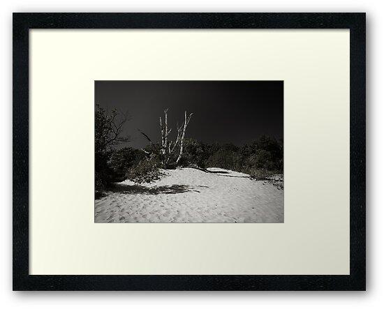 White Birch by Dave Heumann