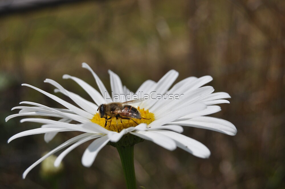 Bee + Flower by LlandellaCauser