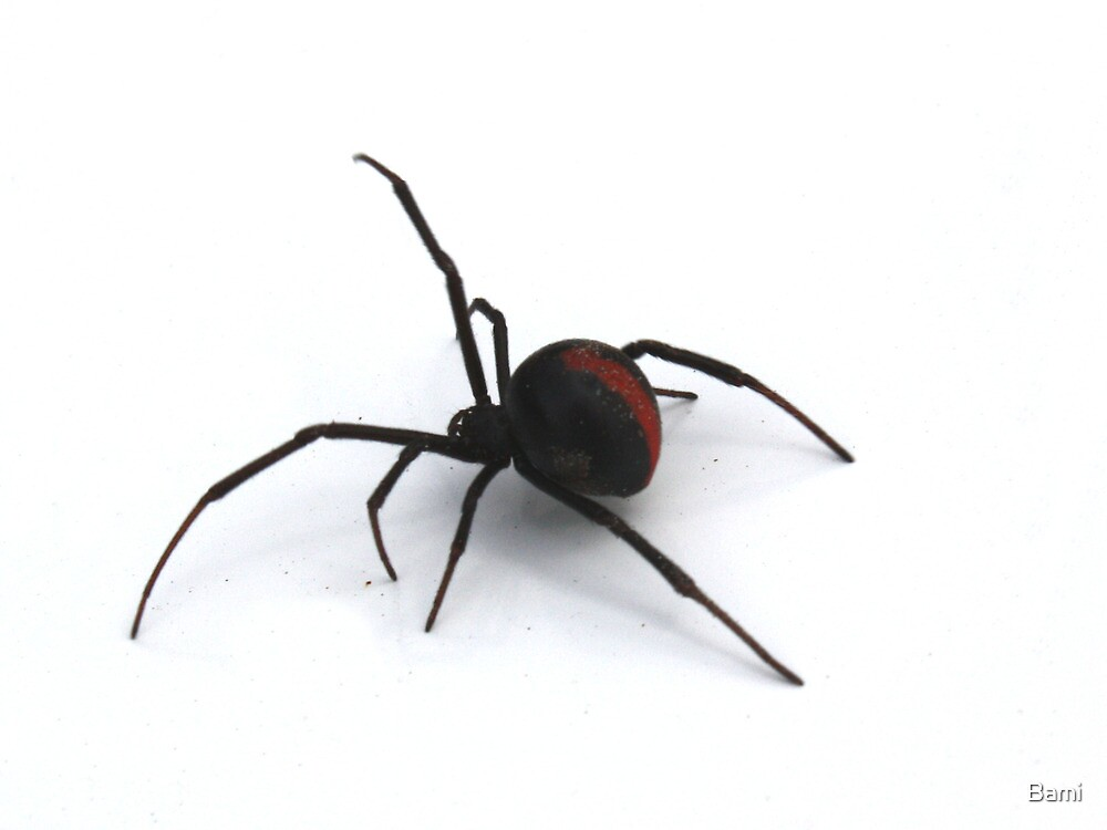 Redback on the Move by Bami