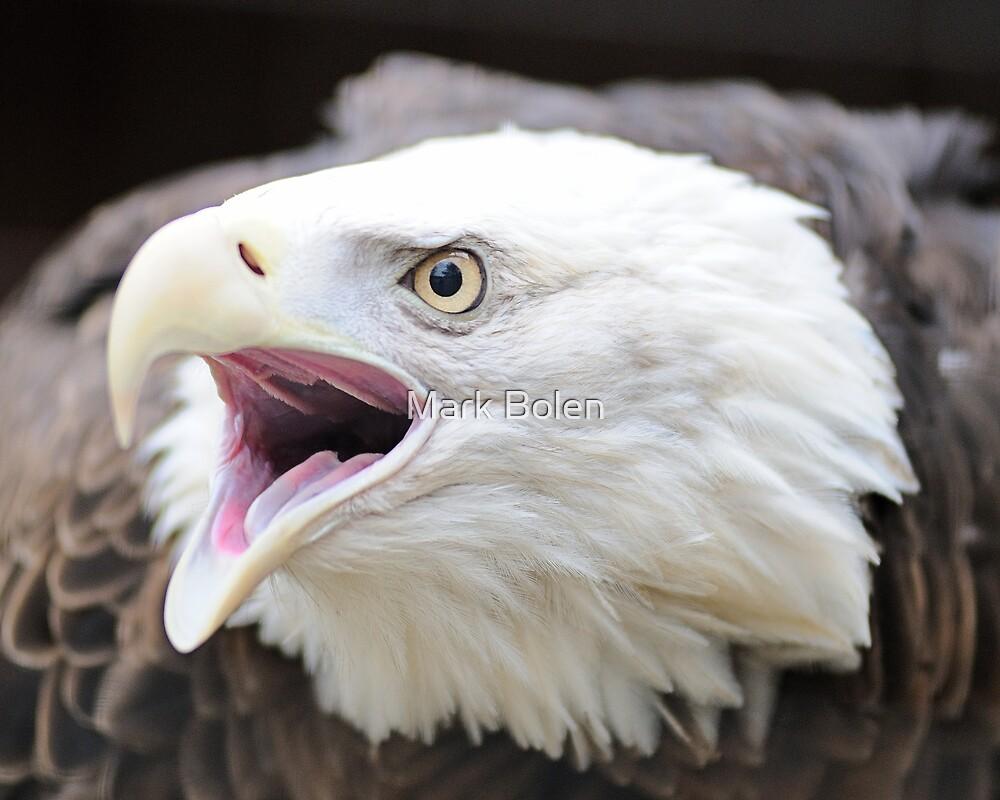 America's Bird by Mark Bolen