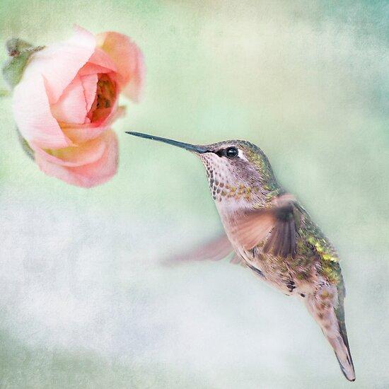 Hummingbird on Green by Susan Gary