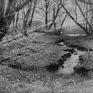 Creek by Tim Wright