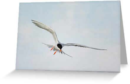Forster's Tern Upon Cirrus Skies by Susan Gary