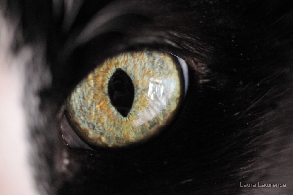 Cats'Eye by Laura Lawrence