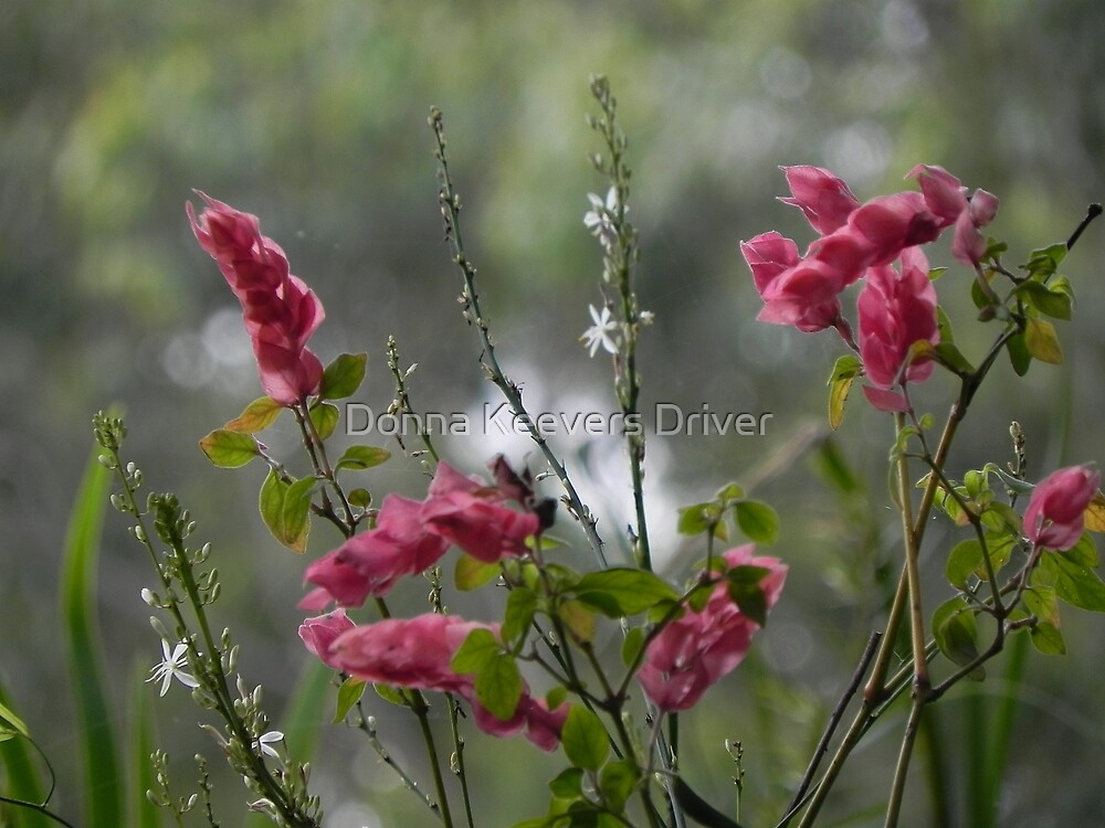 Untitled by Donna Keevers Driver