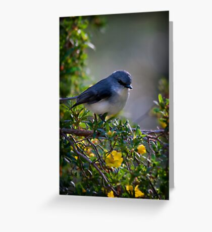 """""""White Breasted Robin"""" Greeting Card"""