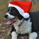 bush christmas  by jane walsh