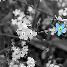 Blue flower by MrDeath