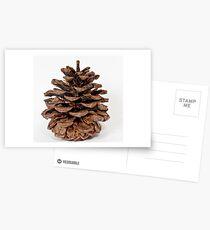 Pine Cone Postcards