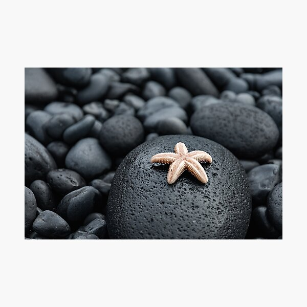 Cute starfish on lava rocks Photographic Print