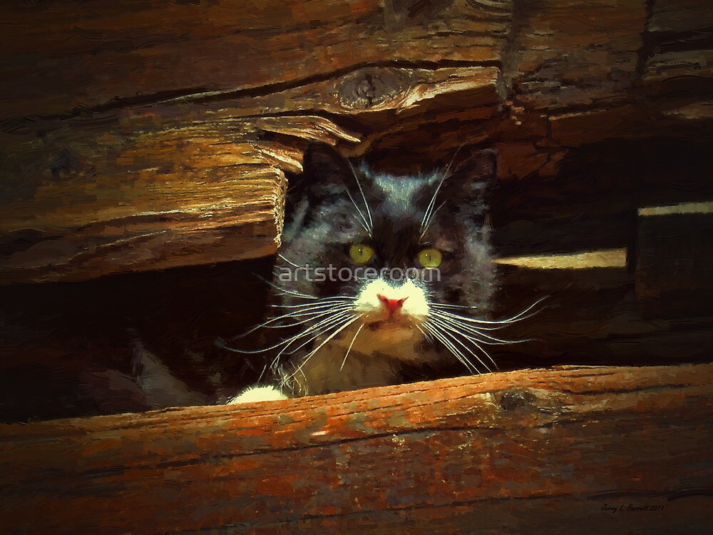Cat Hiding by artstoreroom