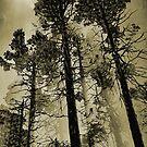 Through The Fog by CarolM