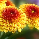 two-toned mum by lensbaby