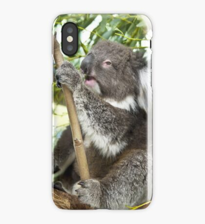 Australian Koala iPhone Case