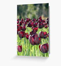 Tulips en masse Greeting Card
