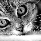 Cat by Bridie Flanagan