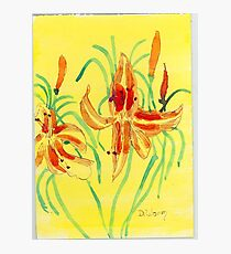Day Lillies Photographic Print
