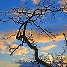 Gary Oak Winter Evening by TerrillWelch