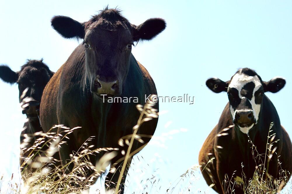 The Three Amigos by Tamara  Kenneally
