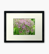 The blooms in blossoms Framed Print