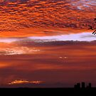 Dawn ... by Joy Rensch