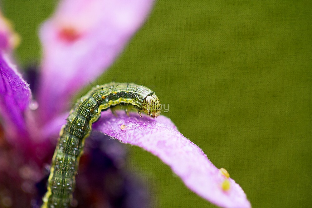 Insect World by Josie Eldred