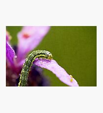 Insect World Photographic Print