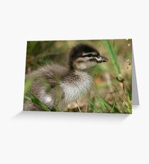 Baby Wood Duck Greeting Card