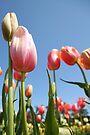 Tulip Rise by Emma Holmes