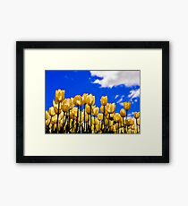 tulips under white Framed Print