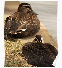 Hide-My-Bill Duck Poster